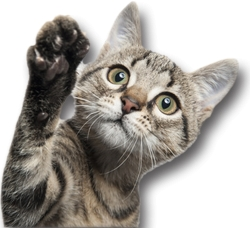 Carenze alimentari e fenomeni allergici per un gatto di 16 anni