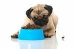 Carlino con problemi gastrointestinali, quale alimentazione?