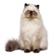 Ceneri gregge nelle crocchette per gatti, cosa sono?