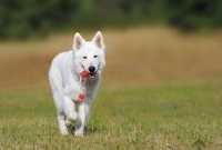 Passaggio da crocchette Puppy ad Adult per cucciola sterilizzata