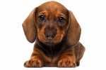 Educazione cucciolo: come abituare il cane a stare da solo