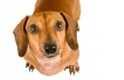 Come disabituare il cane a fare la pipì in casa