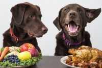 Come educare un cane a non chiedere cibo a tavola