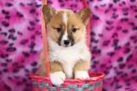 Come educare un cucciolo: i 5 punti fondamentali