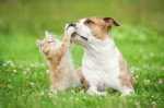 Come far avvicinare cane e gatto