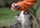 Come gestire un cucciolo che morde in modo aggressivo