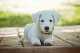Consigli sull'educazione di un cucciolo