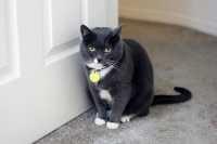 Consiglio alimentazione gatto 5 anni