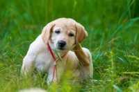 Consiglio alimentazione per cane con dermatite