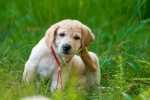 Consiglio alimentazione per cucciolo che si gratta