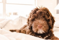 Consiglio crocchette per svezzamento cucciolo