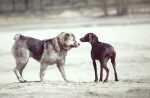 Consiglio per socializzazione tra cani