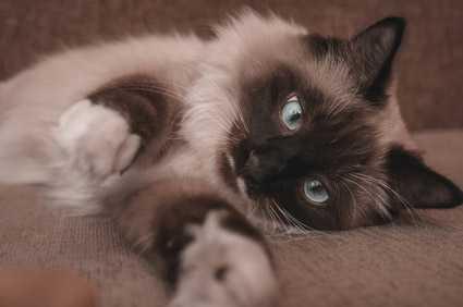 Consiglio su crocchette Urinary per gatto