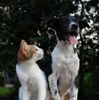 Crocchette cani e gatti Farmina, Prolife, Monge, Carnilove in Offerta