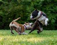 Crocchette consigliate per cane con dermatite