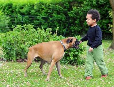 Crocchette ideali per un cane boxer con azotemia ed amilasi alta ed infiammazione al pancreas
