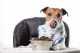 Crocchette per cani Brit Care promo 12+2 Kg e Prolife Dual Fresh mini