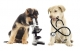 Cucciola di cane che perde i peli a chiazze