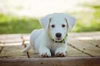 Cucciola troppo vivace, come gestirla correttamente?