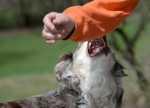 Cucciolo aggressivo durante il gioco. Come gestirlo correttamente?