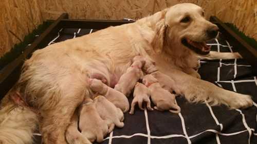 Cucciolo allontanato dalla mamma, cosa fare?
