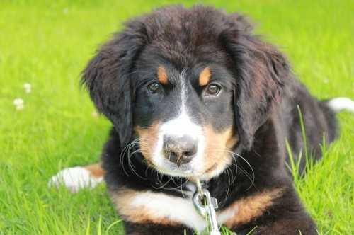 Cucciolo e problema di socializzazione con altri cani