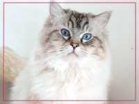 Difficoltà ad urinare per una gatta, da cosa può dipendere?