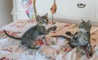 Due gatti in un piccolo appartamento, come renderlo confortevole e stimolante?
