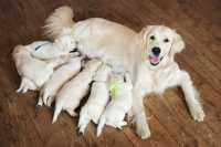E' consigliabile far uscire di casa un cane incinta? Ecco cosa fare