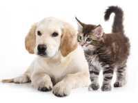 E' utile dare la vitamina C a cani e gatto?