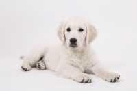 Educare un cucciolo a fare i bisogni fuori