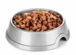 Effetti del cambio di alimentazione per un cane amstaff