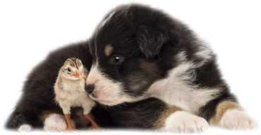 Fare uscire di casa un cane cucciolo non ancora vaccinato