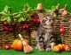 Fish4Cats gli aspetti positivi dell'alimentazione a base di pesce per il gatto