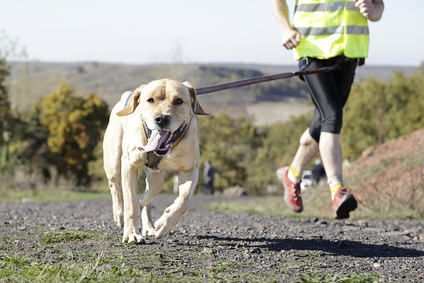 Frattura dell'osso radiale del carpo per un cane sportivo, quali cause e conseguenze?