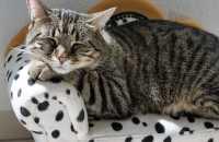 Gatta che fa pipì su letto e divano, come fare?
