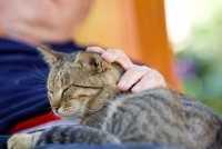 Gatti e anziani, un connubio perfetto