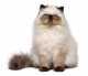 Gatti obesi o in sovrappeso: come far dimagrire un gatto