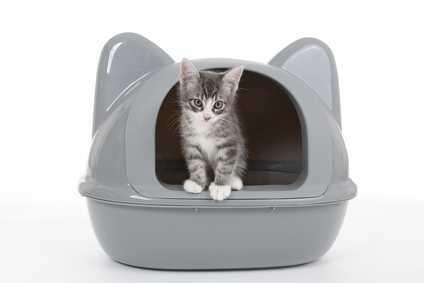 Gattina che fa i bisogni fuori dalla lettiera e non esce mai dalla cuccia