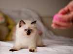 Gattina paurosa
