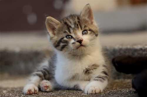 Gattina troppo aggressiva, come gestirla?
