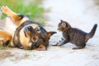 Gattina trovatella e convivenza con un cane