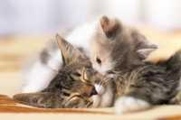 Gattini con occhi chiusi dopo 3 settimane, cosa può essere? Cosa fare?