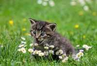 Gattino che fa pipì su letto e tende, come fare?