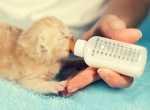 Gattino di 7 mesi con diarrea cronica, cosa fare?