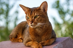 Crocchette Grain Free per gatto con digestione delicata | La Nutrizionista risponde