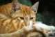 Gatto che si lecca insistentemente la coda, cosa fare?