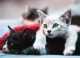 Gatto con blefarite, cosa fare?
