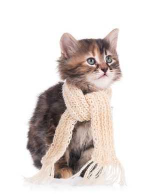 Gatto con colite, è pericolosa?