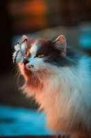 Gatto con orecchio lesionato, da cosa può dipendere?